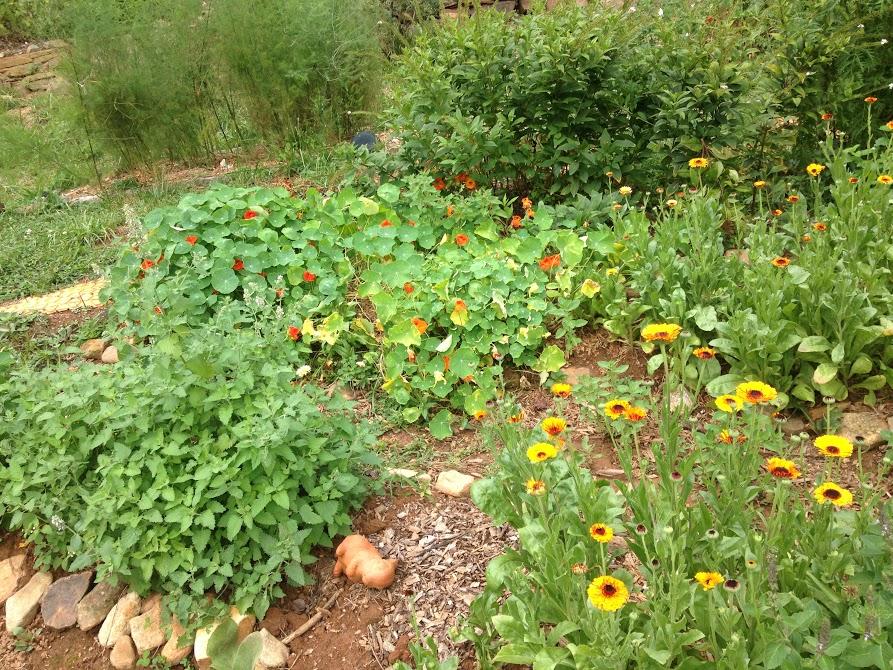 Greenheart Gardens Herb Beds