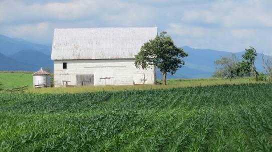 Video – WNC FarmLink Farm Succession Testimonial